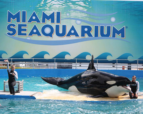 City Tour Miami Seaquarium